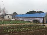 丹阳镇山口村养殖场房800平米厂房出租