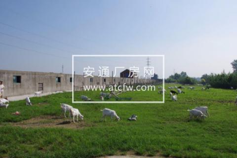 靠河12000平米土地养殖场出租 羊场厂房仓库急租