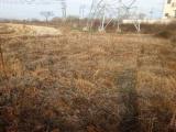 兰溪经济开发区通游路附近大约2000平米土地出租