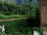 怀柔青龙峡6000平米果园出租,推广勿扰