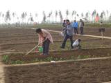 安徽雨甜农业土地代租代种现实版QQ农场