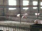 铝厂 东河区臭水井 厂房 500平米