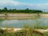 农牧场出租九原哈林格尔包钢水源地南6.5