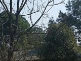 南昌市进贤县下埠厂房出租,800平米