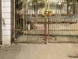 八路车终点站 厂房 700平米