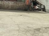 王庄堡镇 厂房 1000平米