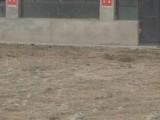 大同县区开发区蔚洲疃村200方厂房出租