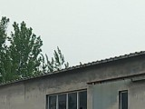 东昌府区凤凰工业园900方厂房出租