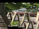 武清区大孟庄镇1600方厂房出租