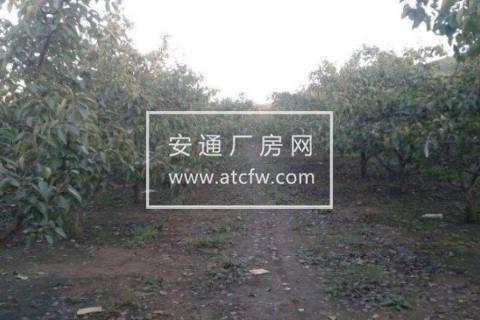 大石桥区博洛铺刘大村40000方土地出租