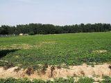 谯城区亳州市十八里镇花海大世界3333方土地出售