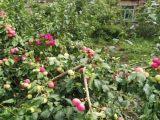 龙井区原农学院校址草仙药业对面868方土地出售