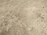 南山区西丽白沙物流旁2000方土地出租