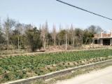 崇明区离堡镇5分钟3600方土地出售