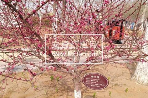 遵化市区刘备寨乡6666方土地出售