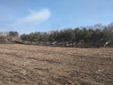道里区薛家南5公里后愉村五一屯3000方土地出售