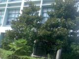 江宁区燕湖路189号2800方厂房出租
