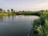 大石桥市水源镇1500方土地出租