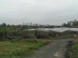 兴宁区四塘社区130000方土地出租