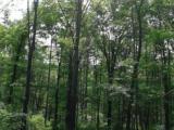 其他区威虎山景区牡丹江横道河子13333方土地出售