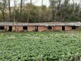 宾县区胜利镇养老院4700方土地出售