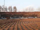 尚志市35000方土地出售