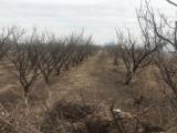 铁锋区种畜厂一连1000000方土地出售