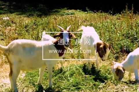 北京昌平区10亩小菜园分租:距六环五公里