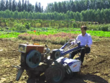 北京昌平20亩耕地出租(可分租):距六环五公里