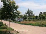 南京周边河南省项城市王明口镇王明10000方厂房出租