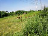 沈阳于洪裸地出租140亩,可工业,可种地, 紧邻304国道