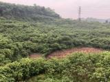 武胜区旧县柑子园666000方土地出租