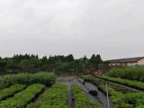 上海周边沪常高速昆山出口10000方土地出租