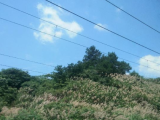 龙子湖区汤河路旁,大明文化园附近2000方土地出租